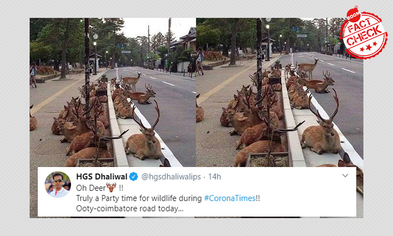 Oh Deer: Pic From Japan Peddled As Herd Spotted At Ooty-Coimbatore Road