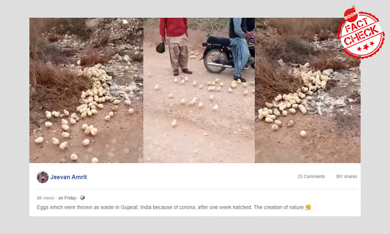 Video Of Chicks Hatching In The Open Not From India