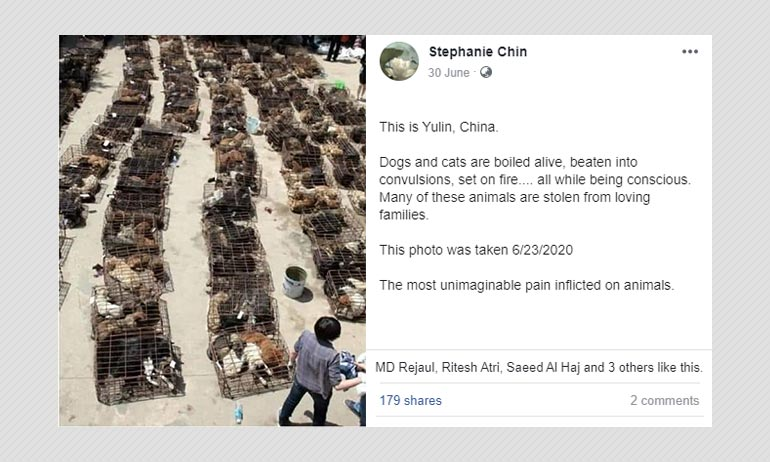 This Photo Of Caged Dogs Is Not From Yulin Annual Dog Meat Festival
