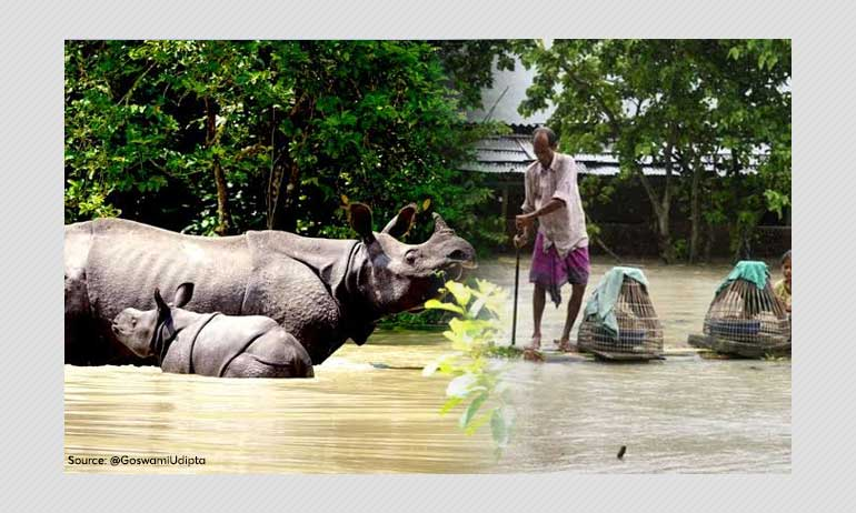 71 Dead In Assam As Floods Ravage State; Kaziranga Submerged