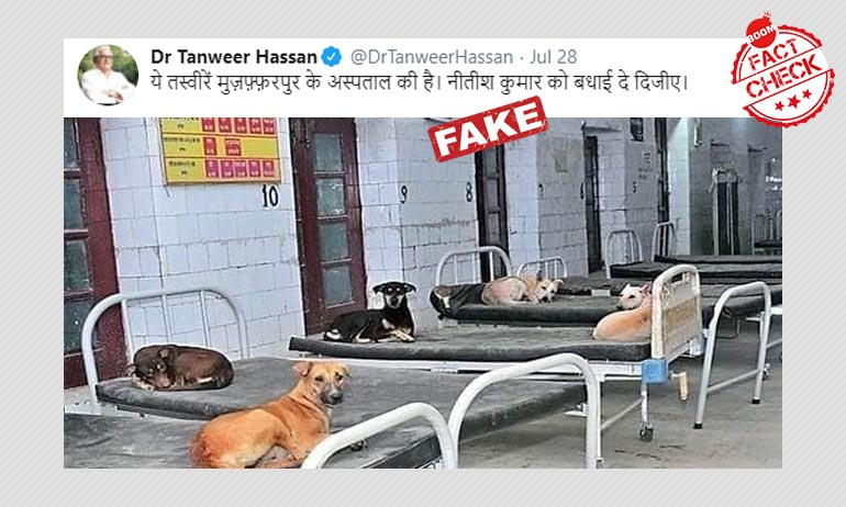 2017 Photo Of Dogs Lounging On Hospital Beds In Bihar Viral As Recent