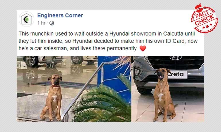Stray Dog As Salesman In Kolkatas Hyundai Showroom? Not Really