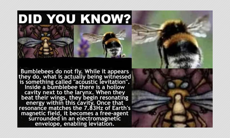No, Bumblebees Do Not Use Acoustic Levitation To Fly