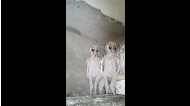 Aliens Or Barn Owls In Vizag? The Real Story Behind The ...