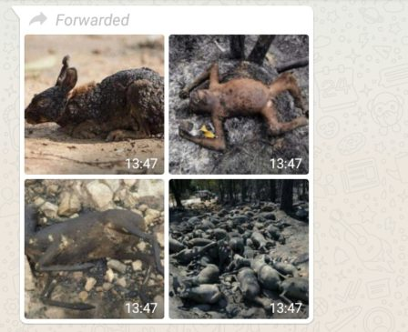 Image of Burnt Animals