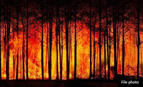 Image shows burning trees in a forest