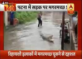 Crocodile abp news
