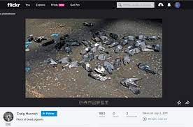 Screenshot of the photo on Flickr